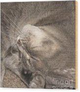 Meowww I Have A Headache Wood Print