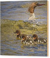 Merganser Lake Tahoe Wood Print