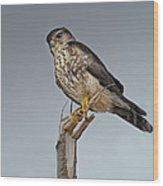 Merlin Falcon Wood Print