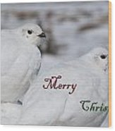 Merry Christmas - Winter Ptarmigan Wood Print