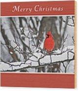 Merry Christmas Male Cardinal Wood Print