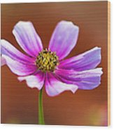 Merry Cosmos Floral Wood Print