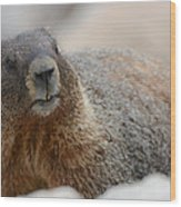 Merry Marmot Wood Print