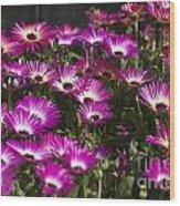 Mesembryanthemums 3 Wood Print