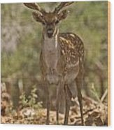 Mesopotamian Fallow Deer 3 Wood Print