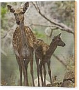 Mesopotamian Fallow Deer 4 Wood Print