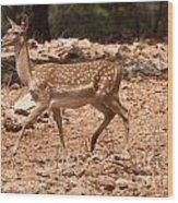 Mesopotamian Fallow Deer  Wood Print