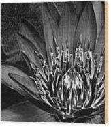 Metal Lotus Wood Print
