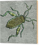 Metallic Green And Gold Prehistoric Insect  Wood Print