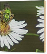 Metallic Green Wasp Wood Print