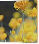 Mexican Gold Poppies Wood Print