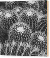 Mexican Golden Barrel Cacti Wood Print