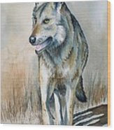 Mexican Grey Wolf Wood Print