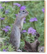 Mexican Ground Squirrel In Wildflowers Wood Print