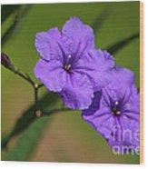 Mexican Petunia Wood Print