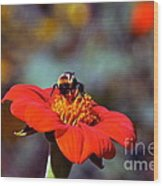 Mexican Sunflower Open House Party Time Wood Print