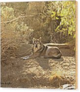 Mexican Wolf  Wood Print