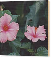 Mexico Pink Beauties By Tom Ray Wood Print