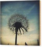 #mgmarts #dandelion #weed #sunset #sun Wood Print