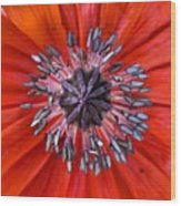 #mgmarts #nature #poppies #poppy Wood Print