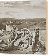Michael Noon Sitting On A  Pile Of Whale Bones Monterey Wharf  Circa 1896 Wood Print