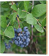 Michigan Blueberries Wood Print