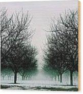 Michigan Cherry Trees In Winter Wood Print