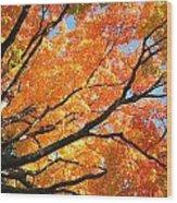 Michigan Sugan Maple Wood Print