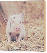 Micro Pig Wood Print