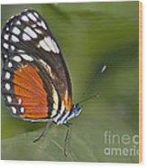 Micro Wings... Wood Print