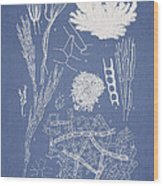 Microdyctyon And Cladophora Wood Print