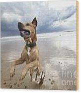 Mid-air Beach Dog Wood Print by Eldad Carin