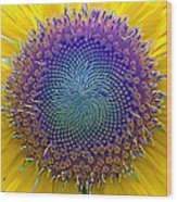 Middle Of Sunflower Close-up Wood Print