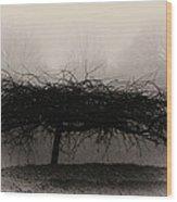Middlethorpe Tree In Fog Sepia - Award Winning Photograph Wood Print