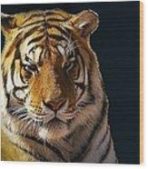 Midnight Catnap Wood Print