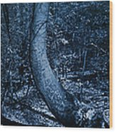Midnight Woods Wood Print