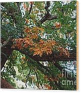 Mighty Fall Oak #1 Wood Print