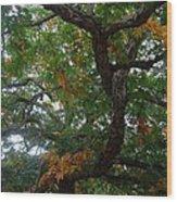 Mighty Fall Oak #2 Wood Print