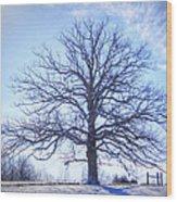 Mighty Oak In Winter Wood Print