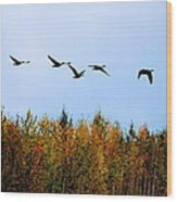 Migratory Flight Wood Print