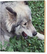 Miley The Husky With Blue And Brown Eyes - Impressionist Artistic Work Wood Print