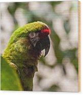 Military Macaw Wood Print