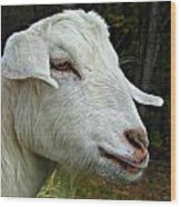 Milkshakes The Goat Wood Print