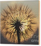 Beauty Of The Dandelion 2 Wood Print