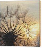 Milkweed 2 Wood Print