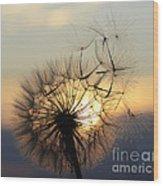 Milkweed 5 Wood Print