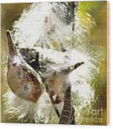 Milkweed Blowout Wood Print