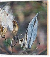 Milkweed Breaking Free Wood Print