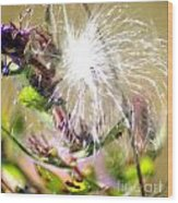 Milkweed Cotton  Wood Print