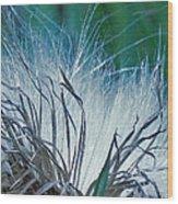 Milkweed Wood Print